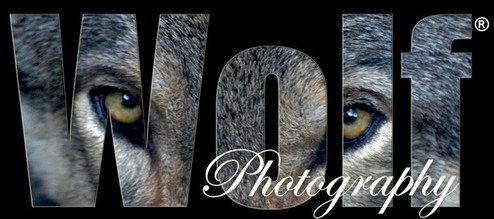 Wolf Photography - Blogs